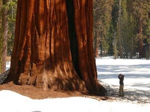 30 Yıldır Baktığı Ağacı Kesilen Yaşlı Adamın İntikamı
